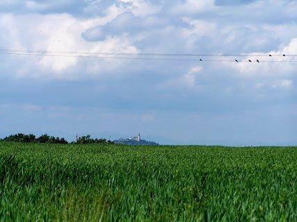 FOTKA - Pohled na Kunětickou horu přes pole