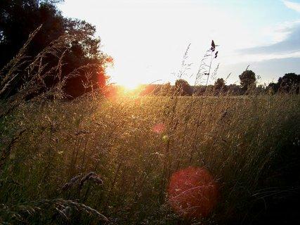 FOTKA - Louka pozlacená od slunce