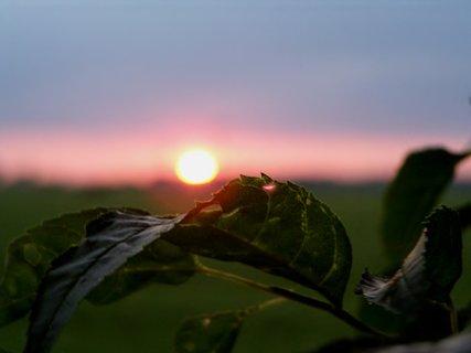 FOTKA - Sluníčko na lístku