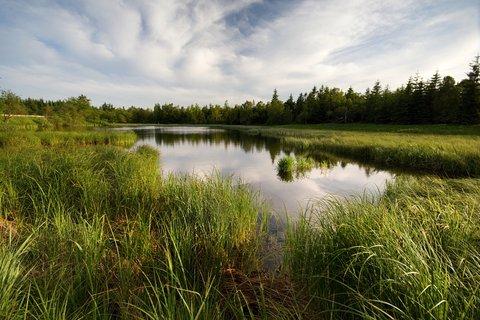 FOTKA - Černý rybník...