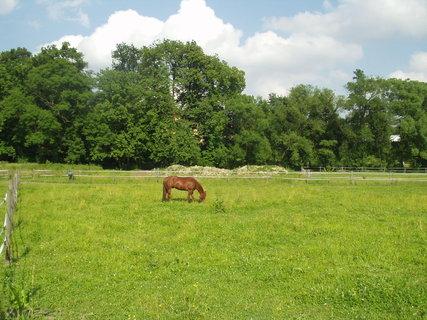 FOTKA - Hnědý kůň