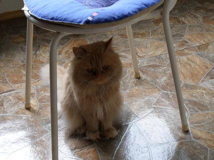 FOTKA - Garfielde, proč sedíš pod tou židlí?!