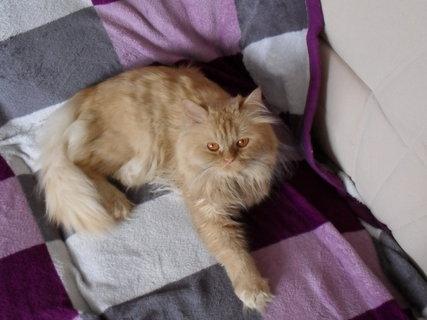 FOTKA - Tsssss, nová sedačka, je na ní deka, tak co!