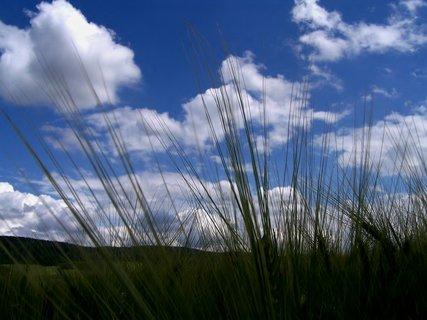 FOTKA - Je to paráda lehnout si na záda a pozorovat přírodu