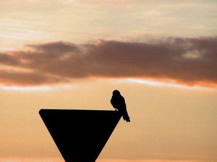 FOTKA - Poštolka sleduje svítání