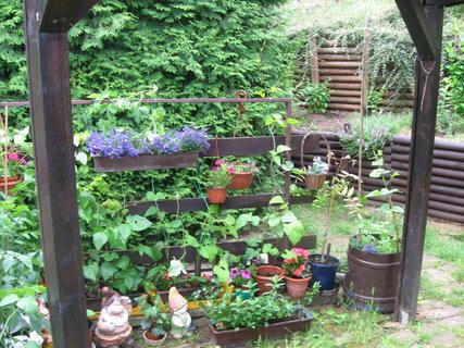 FOTKA - pěstování rajčat na terase