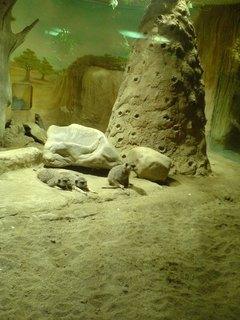 FOTKA - mlsné surikaty