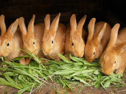 FOTKA - Naši králíčci