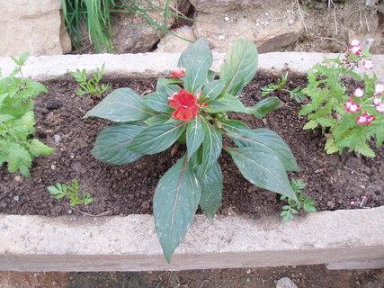 FOTKA - Květiny v korýtku