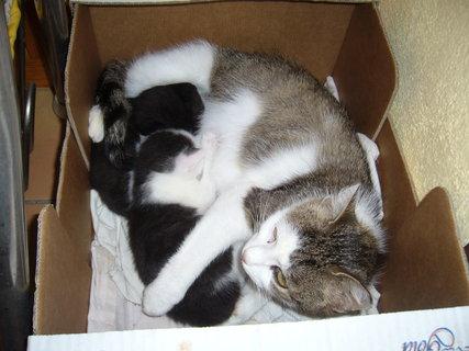 FOTKA - Minda v košíku s koťaty