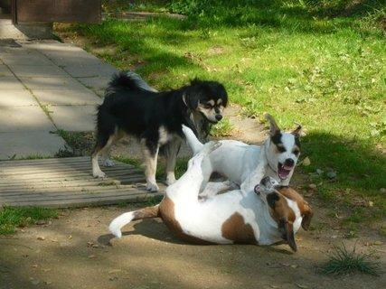 FOTKA - Když se dva perou, třetí se směje