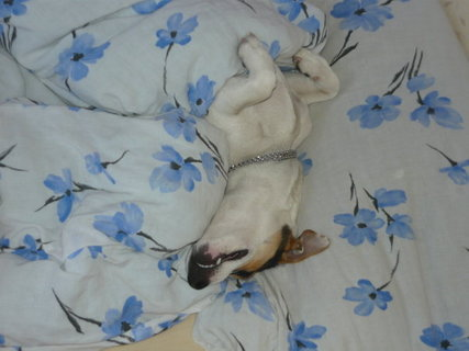 FOTKA - konečně v posteli :-)