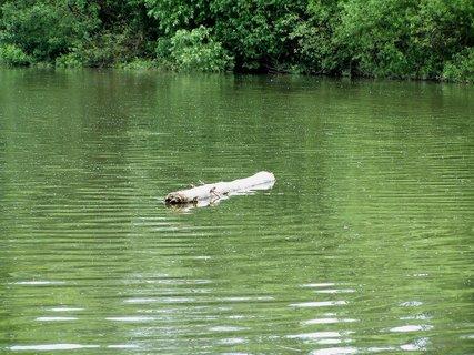 FOTKA - Projížďka na kole kolem Labe-Hani neuplaval Ti vor???