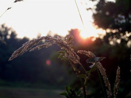 FOTKA - Klasy trávy vítají nový den