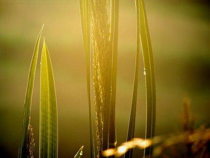 FOTKA - Ostré slunce v ranním oparu