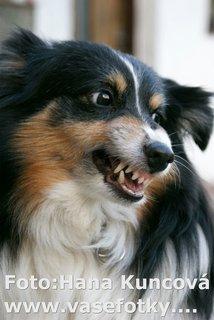 FOTKA - Psi