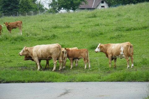 FOTKA - Stádo kraviček 3