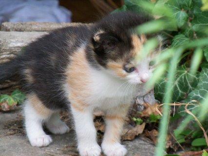 FOTKA - Kočičí mimino