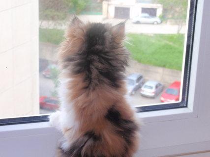 FOTKA - Mišulka kouká z okna