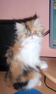 FOTKA - MIšulka u počítače
