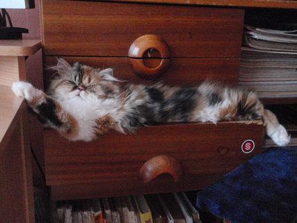 FOTKA - Mišulka spinká v šuplíku