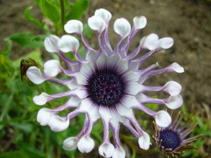FOTKA - Nezná někdo název této květiny?