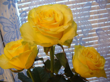 FOTKA - Žluté,ale ne z Texasu,z mé zahrádky