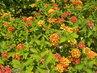 Kvetoucí keřík
