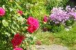 Růže a karafiátky