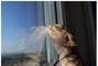 Agátka u okna :)