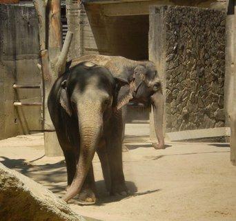 FOTKA - sloni