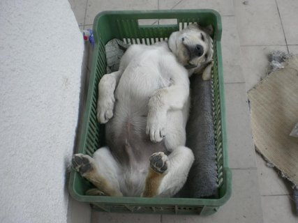 FOTKA - Domáci mazlíček počas spaní