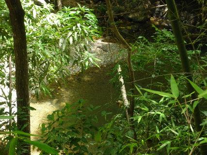 FOTKA - cayman baby,tak nam rekla pruvodkyne o krokodylu v destnem pralese
