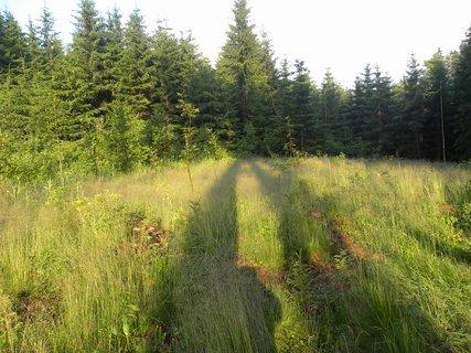FOTKA - Domanínský les.