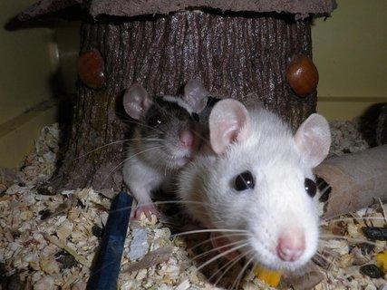 FOTKA - Fifi a Jessie