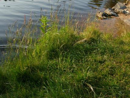 FOTKA - u jezera v trávě,,,