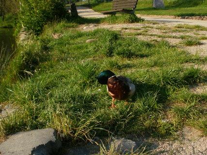 FOTKA - u jezera v trávě,,,,