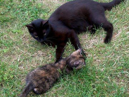 FOTKA - Mamí naučíš mě chytat myšky?