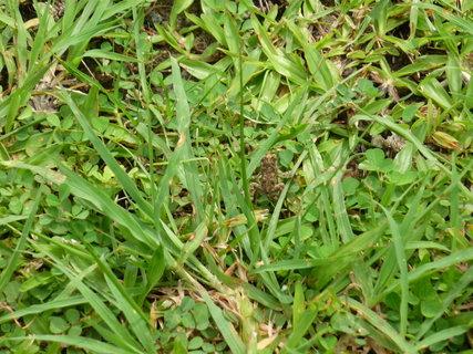 FOTKA - zabicka v trave