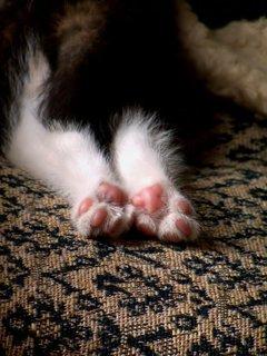 FOTKA - Pohodové kočičí spinkání
