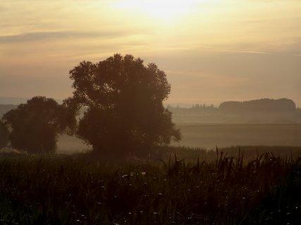 FOTKA - Stromy s ranní mlhou