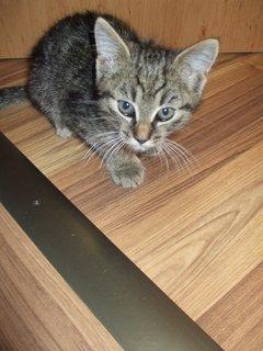 FOTKA - koťátko0
