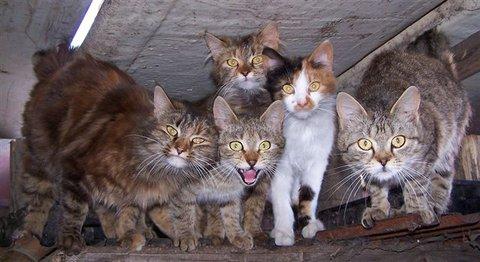 FOTKA - Kočičinec