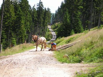 FOTKA - Kůň a práce v lese