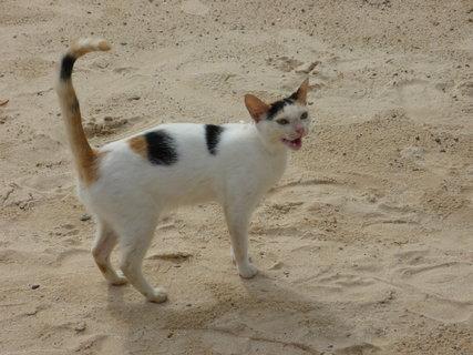 FOTKA - mnoukajici kocicka v parku Heritage