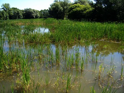 FOTKA - rybník ...1