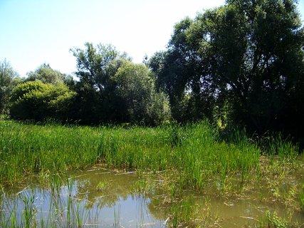 FOTKA - rybník ...2