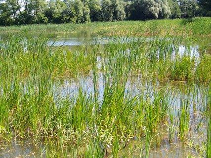 FOTKA - rybník ...3