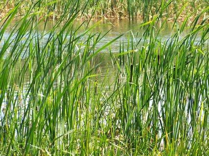 FOTKA - rybník ....4