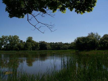 FOTKA - rybník ....5